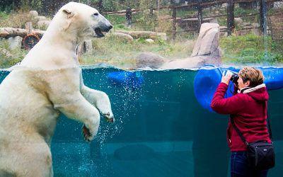 Visite du Zoo de Mulhouse
