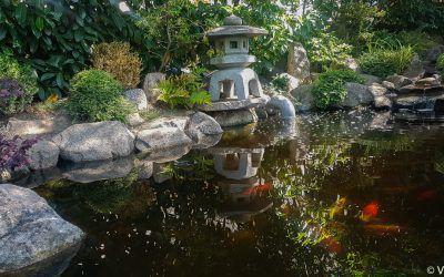 Explorer un jardin japonais à Mulhouse